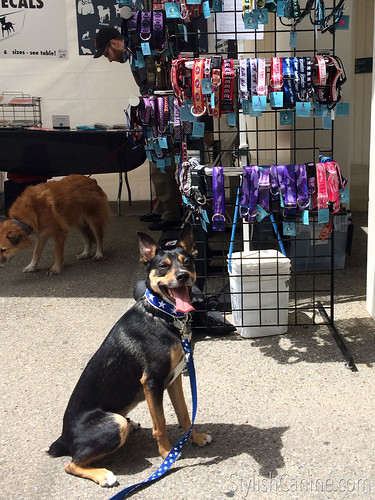 Mort in front of the Stylish Canine dog collars.