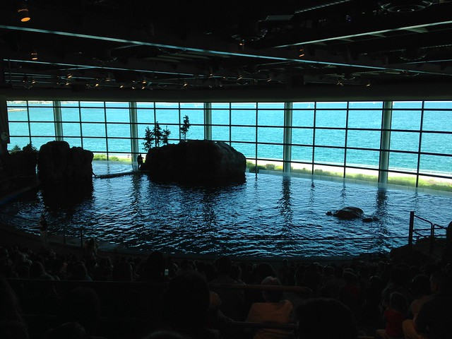at Shedd Aquarium