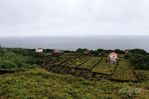 Azores2014_0575
