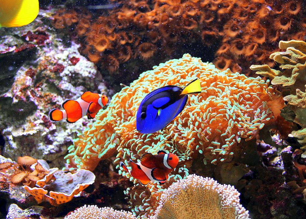bergen-aquarium-finding-nemo