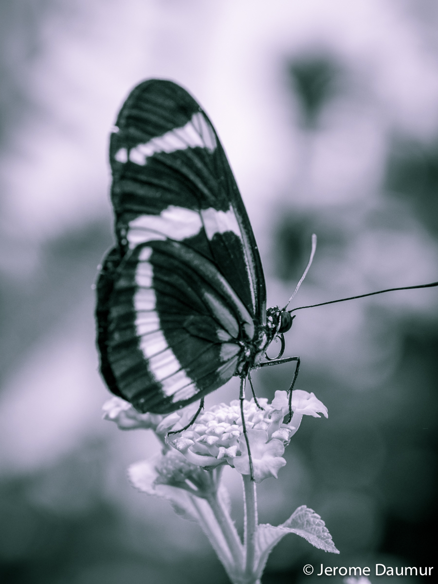 Butterflies Garden 7