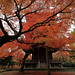 Autumnal leaves,Shin-nyo-do,Kyoto by yopparainokobito