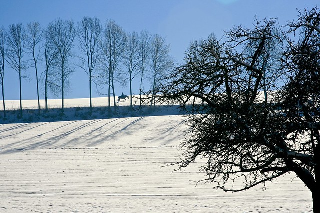 Horse, Canon EOS 400D DIGITAL, Canon EF 24-85mm f/3.5-4.5 USM