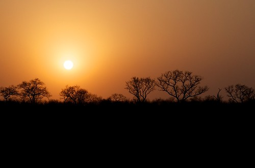 rogersmj posted a photo:	Sunset on our first day out in the bush. Elephant Sands private game reserve, Kruger.