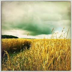 Today's harvest - Photo of Saulnières