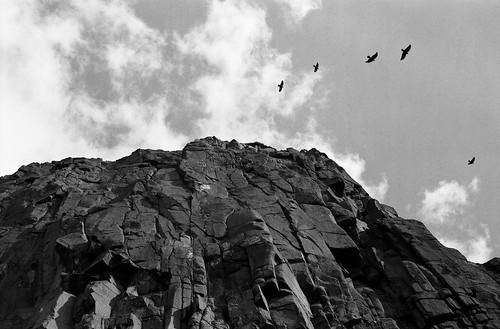 "Image titled ""Birds, Hollyrood Park, Edinburgh."""