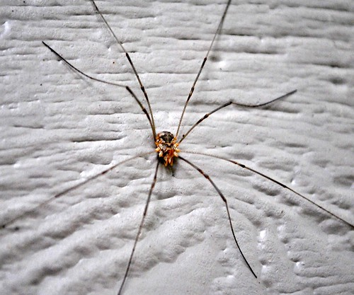 SPIDER, TARANTULA YARN, CUSTOMS 003_crop