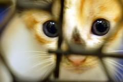 一點幼貓拍攝心得分享