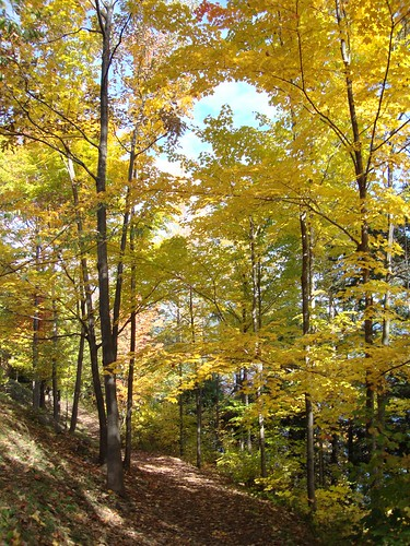 Lake George path of golden trees