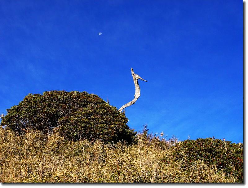 鳳鳥、杜鵑與月亮