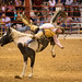 20131108 5DIII Davie Pro Rodeo39 by James Scott S