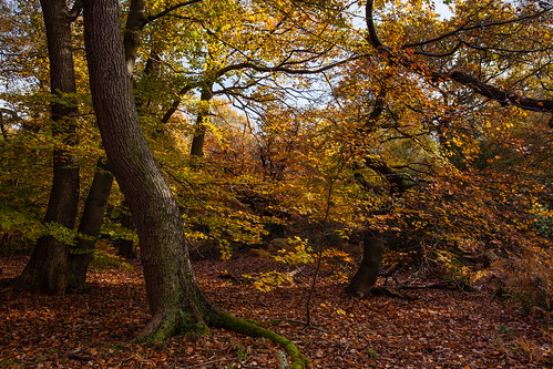 autumn buckinghamshire burnhambeeches roantrum