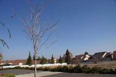 Klaus Naujok posted a photo:	Where have they all home? The lonely leaf left on the tree.