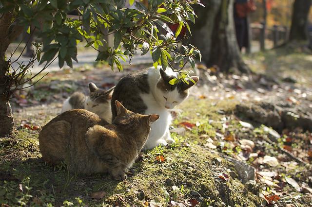 哲学の道で哲学する猫 その5