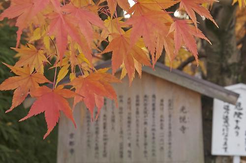 【写真】2013 紅葉 : 光悦寺/2013-12-02/IMGP4448