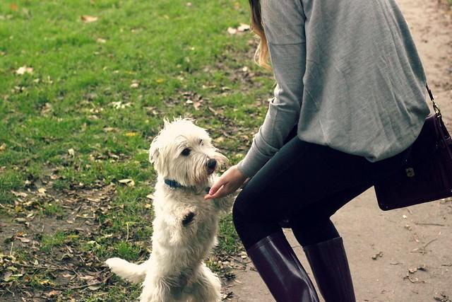 Westie in Park