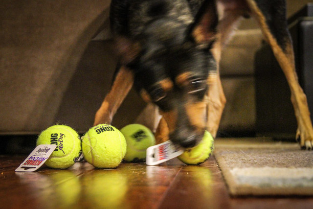 Can't choose just one tennis ball