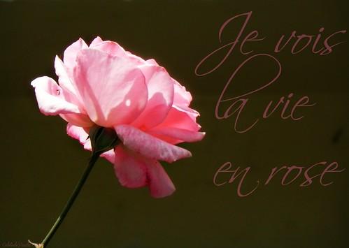 je vois la vie en rose by Odete de Paula