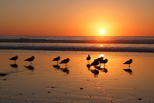 San Diego Sun [Explored]