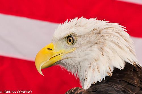newyorkstate putnamcounty birdsofprey2010