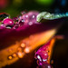 Morning Dew Abstract by Don White (Burnaby) Thanks for the Three Million V