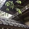 #sanfrancisco #japaneseteagarden #goldengatepark