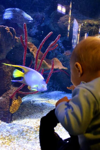 SeaLife (26)muok