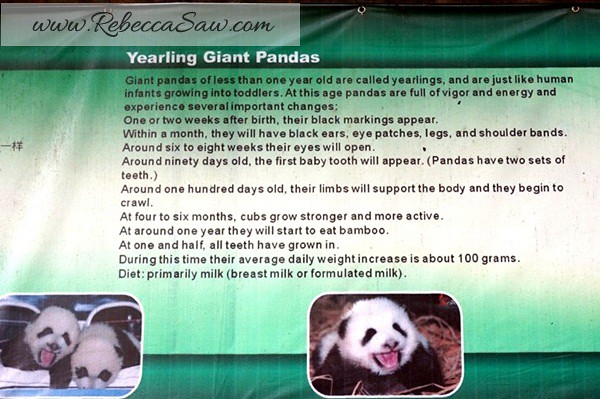 Chengdu - Panda Breeding Farm-025