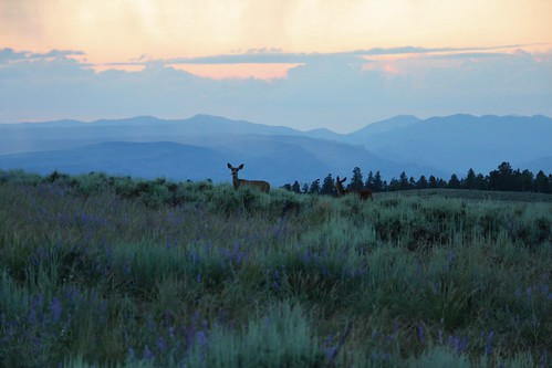 sunset mountains field colorado deer