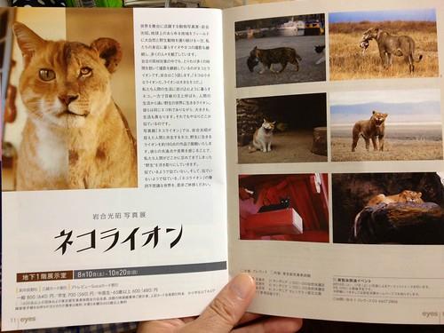 ネコライオン展