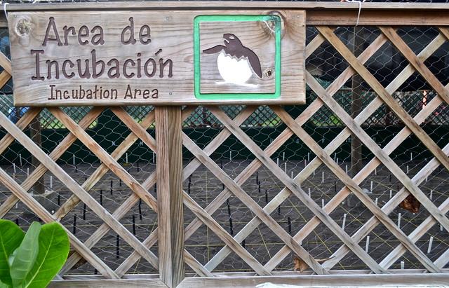 Incubation for Turtles - Monterrico, Guatemala