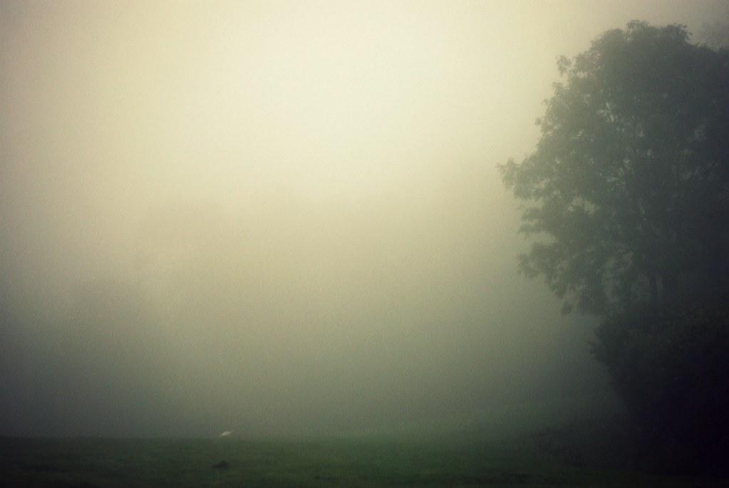mist-14