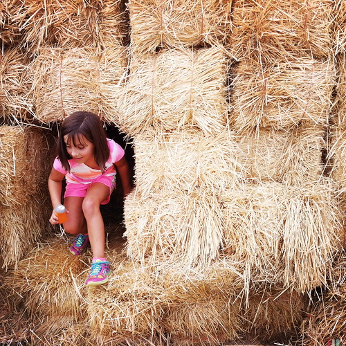 Exiting the hay maze.