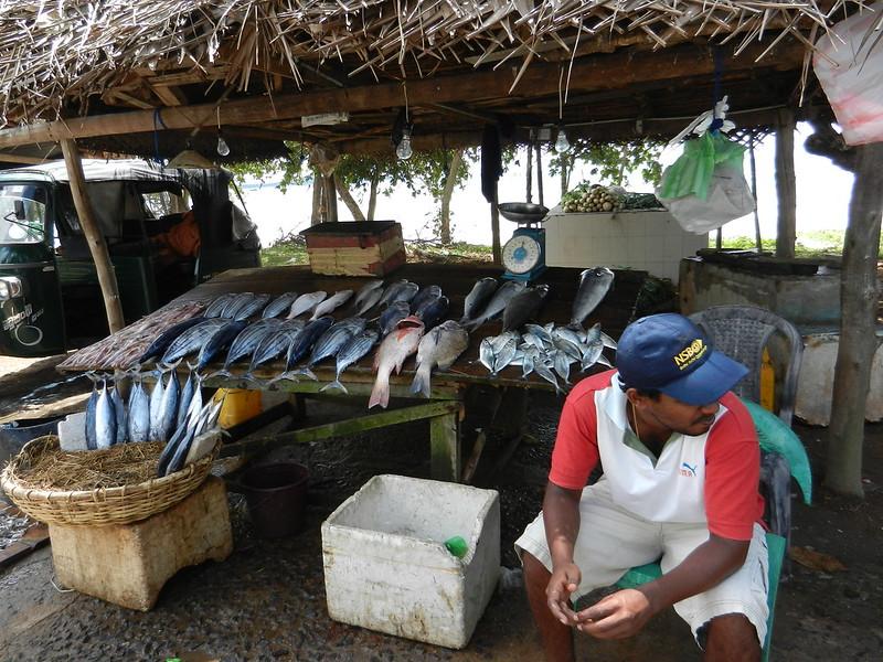 Веллигама. Шри Ланка. Рыбный рынок