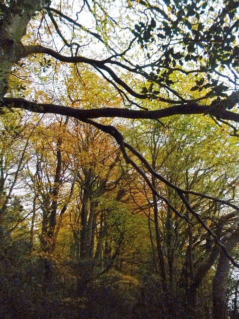 Autumn colour 9
