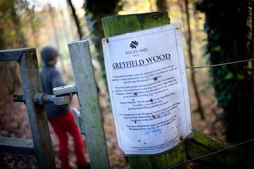 Greyfield Wood
