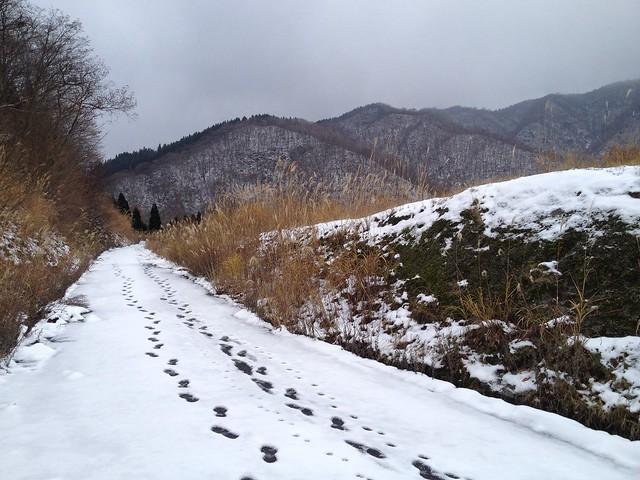 虎子山 国見峠への道