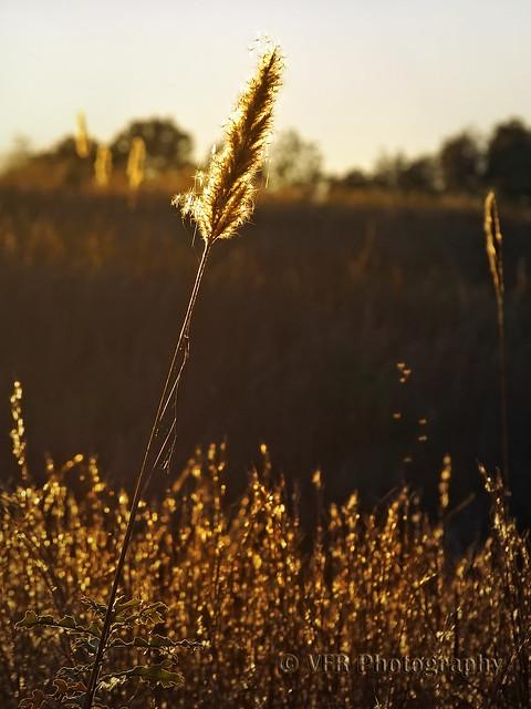 November grasses
