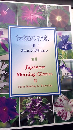 Japanese Morning Glories II - From Seedling to Flowering