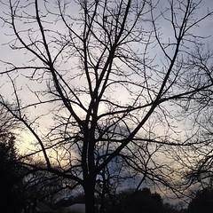 5 January 2014 #sunset #samespotforayear #satx