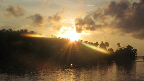 ocean sunrise palms pacific coconut solomonislands
