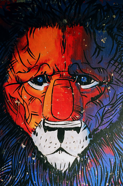 Selbstbewuβter Löwe