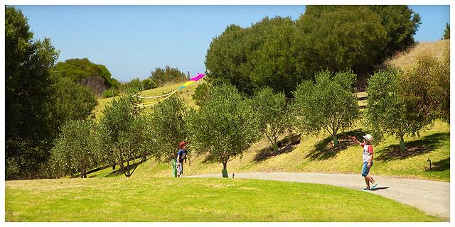 olivefarmblog5