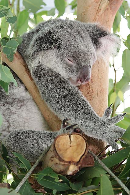 AustraliaZoo6