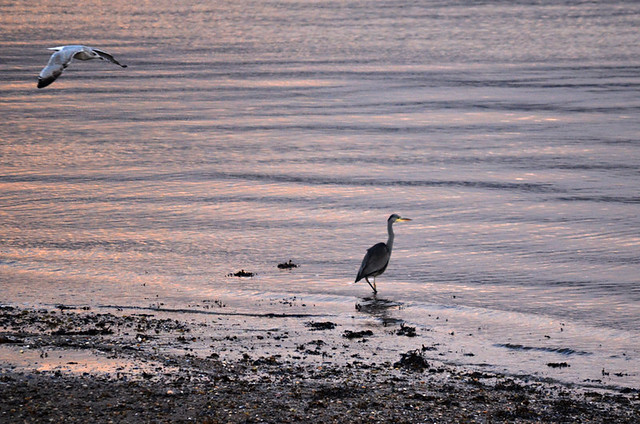 Heron, Children's Corner, Rothesay, Isle of Bute, Scotland