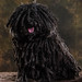 Small photo of Anita's Puli Sprite