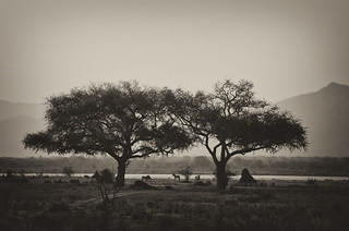 By the Zambezi River