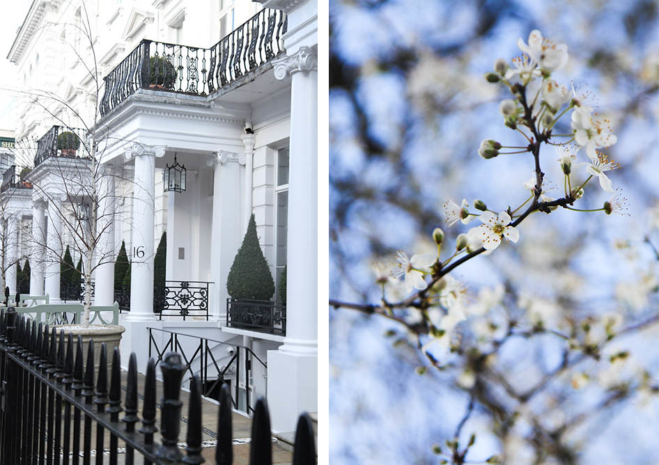 South Kensington, cherry blossom