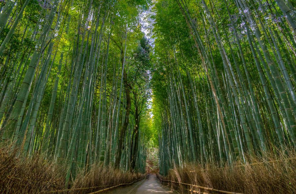 bamboo08.jpg