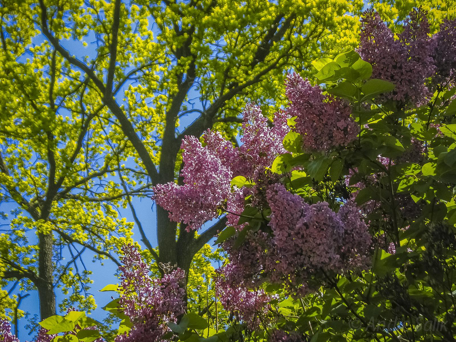 цветы на фоне неба IMG_0087